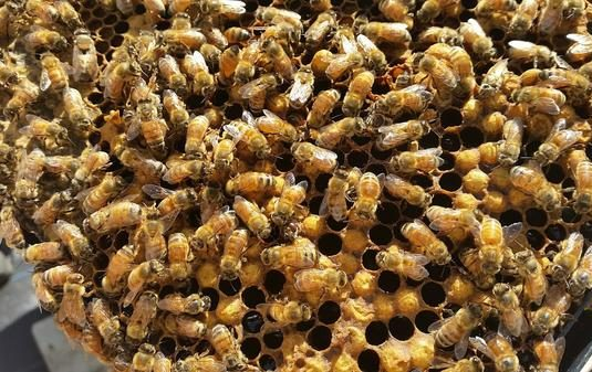 Building Bee Resilience, One Queen At A Time